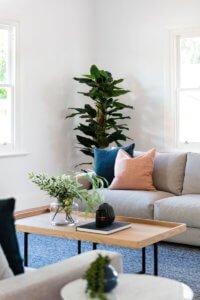 Greenery in the corner of a staged home
